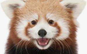 Photo Courtesy: Happy Hollow Zoo