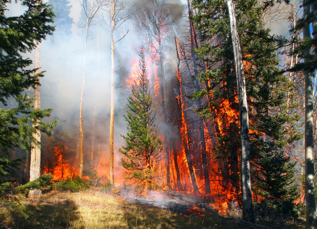 A report out today says acres burned in forest fires in the West have doubled since 1984 because of climate change. (ellend1022/iStockophoto)