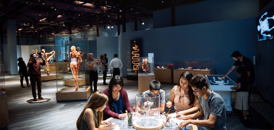 Photo Credit: Body Worlds Decoded / The Tech Museum