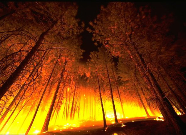 A new report blames dry conditions linked to climate change for this fall's large fires and calls for more funding for prescribed burns. Photo Credit: Wikimedia Commons