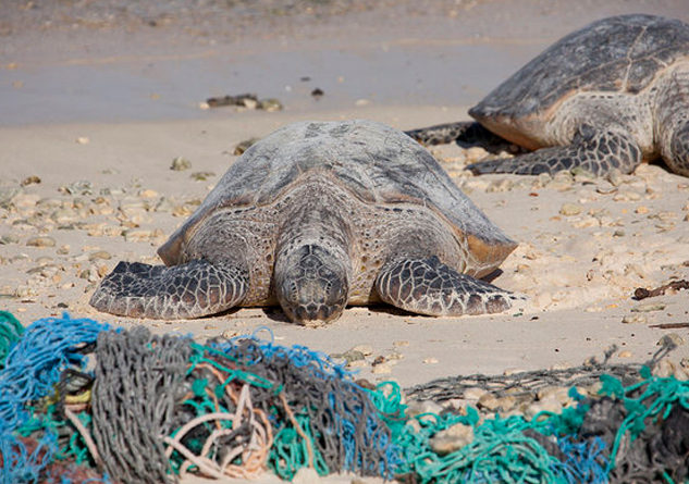 A new report highlights the threats fishing nets pose to sea turtles, which will continue in California now that the feds have withdrawn a proposed rule designed to protect them. Photo Credit: NOAA